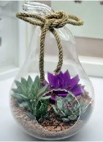 Orta boy armut 3 kaktüs terrarium  Ankara internetten çiçek satışı