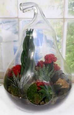 5 adet kaktüs orta boy armut terrarium  Ankara çiçek siparişi sitesi