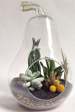 Orta boy armut 5 kaktüs terrarium  Ankara ucuz çiçek gönder