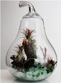 Orta boy Armut 6 adet kaktüs terrarium  Ankara çiçekçi mağazası