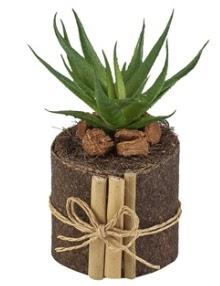 Doğal kütük içerisinde 1 adet kaktüs  Ankara ucuz çiçek gönder