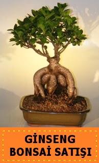 Ginseng bonsai satışı japon ağacı  Ankara cicek , cicekci