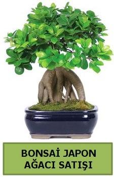 Bonsai japon ağacı satışı  Ankara çiçek satışı