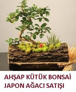 Ahşap kütük içerisinde bonsai ve 3 kaktüs  Ankara çiçekçi mağazası