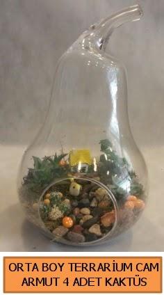 Orta boy teraryum tanzim 4 kaktüs  Ankara çiçek siparişi sitesi