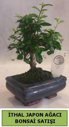 İthal japon ağacı bonsai bitkisi satışı  Ankara çiçekçi telefonları