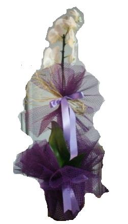 Tek dallı beyaz orkide süper kalite ithal  Ankara çiçek siparişi sitesi