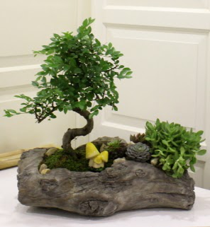 Ağaç kütük içerisinde bonsai ve sukulent  Ankara çiçek gönderme sitemiz güvenlidir
