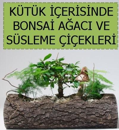 Kütük içerisinde bonsai japon ağaç bitkisi  Ankara çiçek satışı