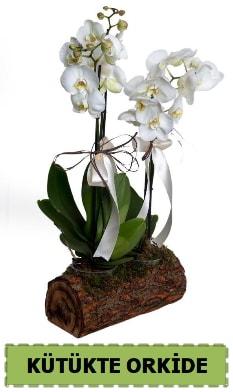 Kütük içerisinde 2 Adet tek dallı orkide  Ankara anneler günü çiçek yolla