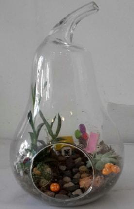 Orta boy cam armut terrarium  Ankara çiçek satışı