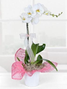 Tek dallı beyaz orkide seramik saksıda  Ankara çiçek gönderme