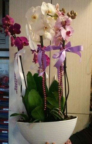 Mor ve beyaz ve pembe 6 dallı orkide  Ankara ucuz çiçek gönder