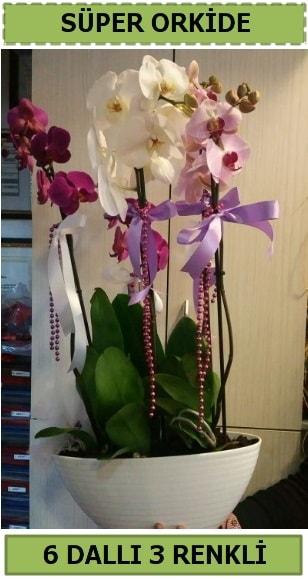 6 dallı 3 renk özel vazoda orkide çiçeği  Ankara çiçek satışı
