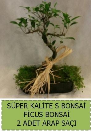 Ficus S Bonsai ve arap saçı  Ankara çiçekçi telefonları