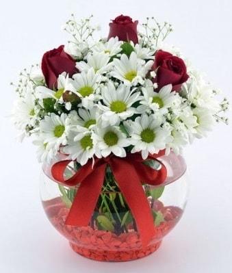 Fanusta 3 Gül ve Papatya  Ankara internetten çiçek satışı