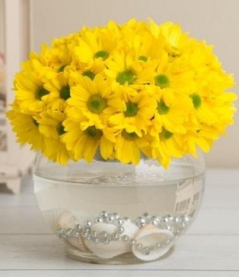 Fanusta Sarı Papatya  Ankara çiçek siparişi sitesi