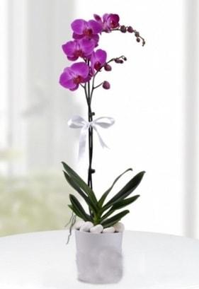 Tek dallı saksıda mor orkide çiçeği  Ankara çiçekçiler