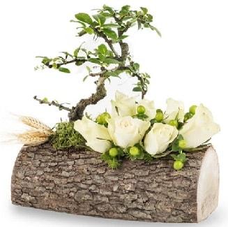 Doğal kütükte bonsai ağacı ve 7 beyaz gül  Ankara çiçek gönderme sitemiz güvenlidir