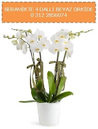 Seramikte 4 dallı beyaz orkide  Ankara çiçekçiler