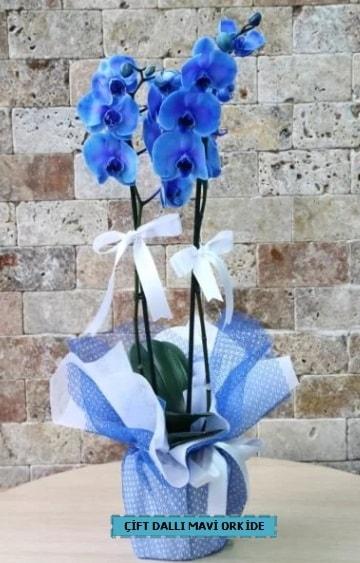 çift dallı ithal mavi orkide  Ankara çiçek yolla
