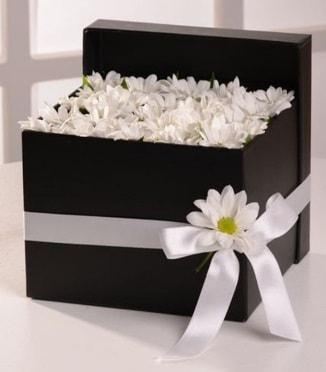 Kutuda beyaz krizantem papatya çiçekleri  Ankara çiçek siparişi sitesi