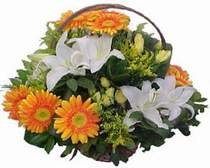 Ankara online çiçekçi , çiçek siparişi  sepet modeli Gerbera kazablanka sepet