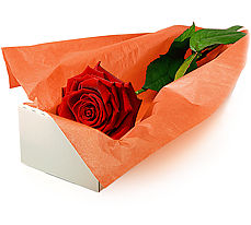 Ankara çiçek mağazası , çiçekçi adresleri  Kutuda tek gül özel kisilere